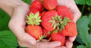 Abades Hoteles habitos-saludables-comer-mas-fruta-y-verdura-en-nuestro-dia-a-dia